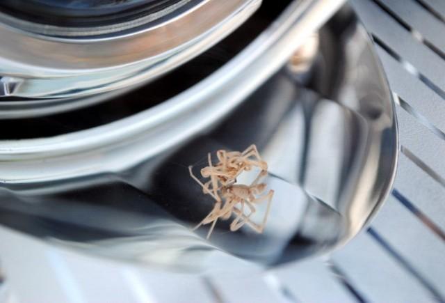 Editorial: Itsy bitsy spider...
