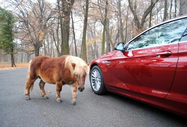 Criza ocoleste BMW Group?