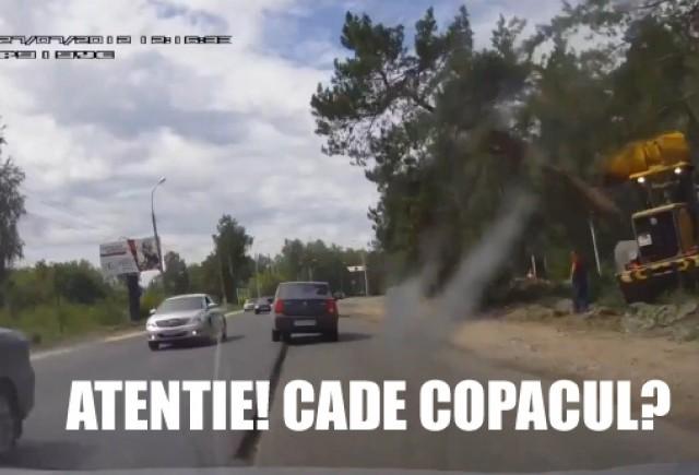 Intre timp in Rusia - M-am dus sa tai copacul de pe marginea drumului