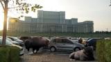 "Alunga ""bizonii"" din trafic!16393"