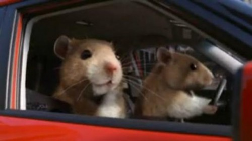 VIDEO: Hamsterii conduc Kia Soul7498