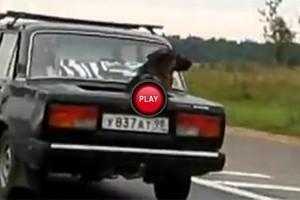 VIDEO: Rusia prezinta echipamentul special pentru caini