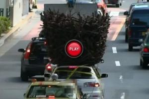 VIDEO: Am si cuib am si masina