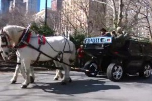 VIDEO: Hummerul cu doi cai putere